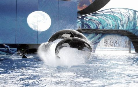 Big step in the right direction for SeaWorld