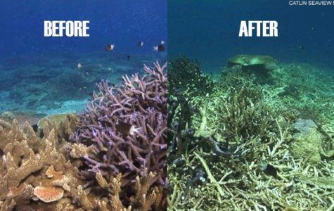 Great Barrier Reef Dead