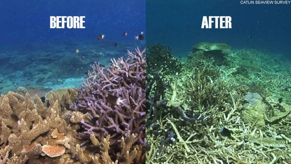 Before Coral Bleaching was a huge problem compared to today