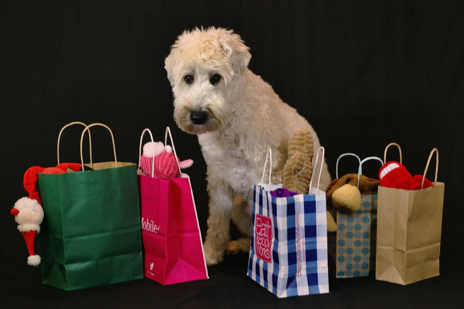 Even household pets love gifts at Christmas