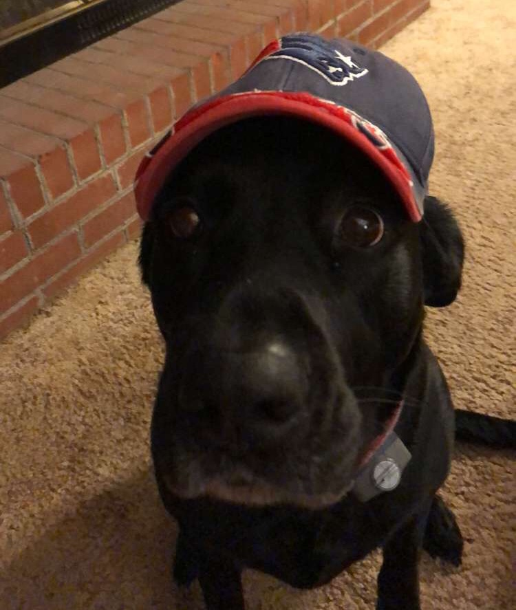 Aubrie+Stevens+and+her+dog+wearing+a+hat+of+their+favorite+team%2C+the+New+England+Patriots