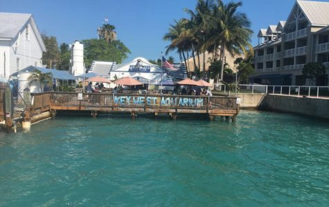 Visiting Key West means taking in all the beautiful sights, including their famous acquarium.