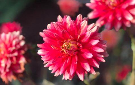 Everyone loves flowers in their frontyard. Flowers brightens the morning.