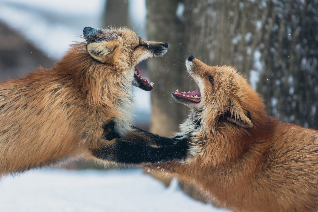 People are supposed to behave properly during a debate but most of the times it turns into a wild fight.