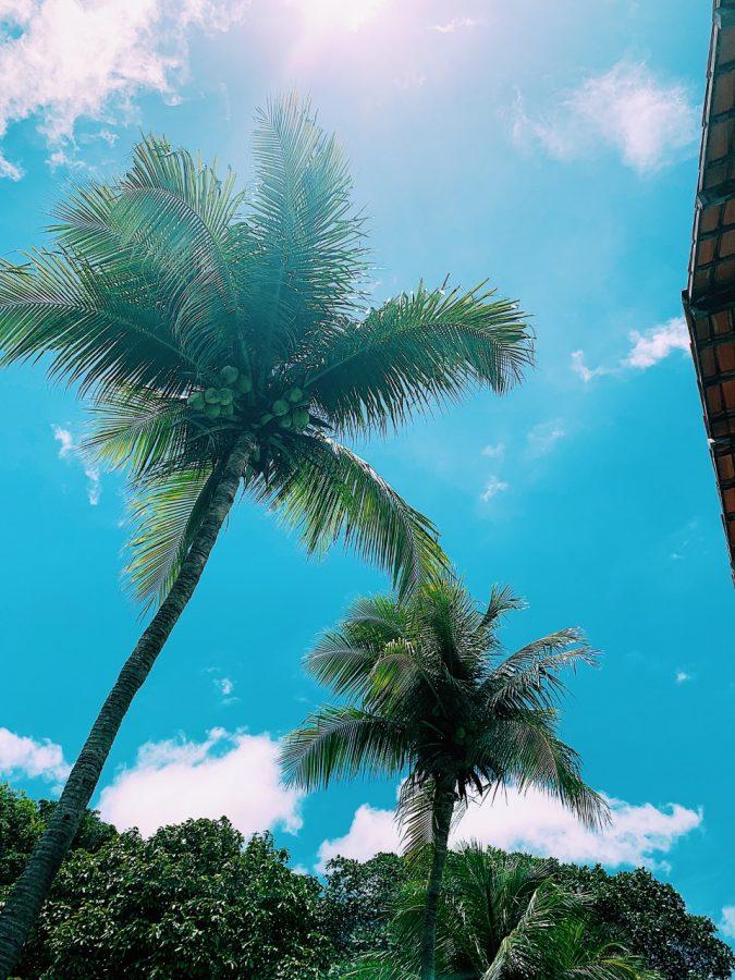 views in brazil