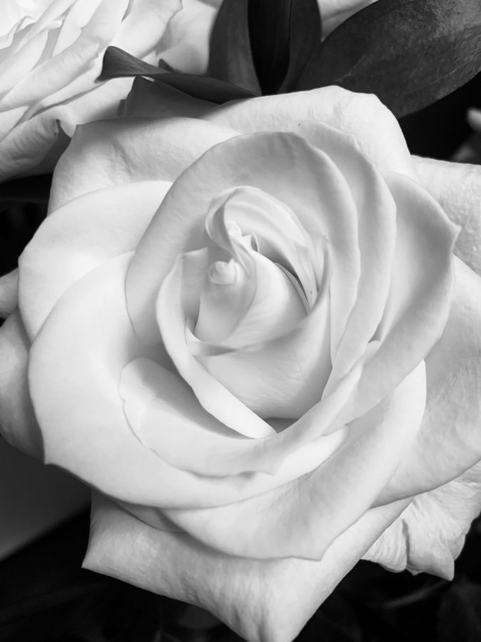 The final rose will be given out in only a couple of weeks.